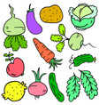 doodle of vegetable various set collection vector image vector image