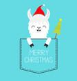 merry christmas alpaca llama sitting vector image