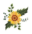 beautiful sunflower drawing vector image vector image