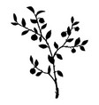 silhouette of bilberry plant vector image vector image
