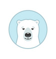 white bear face vector image