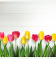 colorful tulips on white wooden table vector image vector image