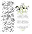 sketch olives vector image vector image