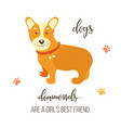 bright card with cute corgi and text vector image vector image