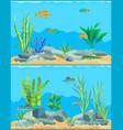 colorful cartoon aquarium fishes set promo poster vector image