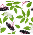 elderberry seamless pattern with twig berries vector image vector image