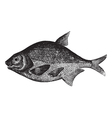 freshwater fish engraving vector image vector image