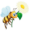 bee holding flower on white background