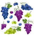 bright set of juice grapes isolated on vector image