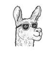 llama in sunglasses sketch vector image vector image