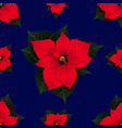 red poinsettia on navy blue background vector image vector image