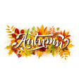 autumn composition with fallen leaves and rowan vector image vector image