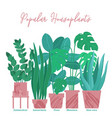 group of houseplants in pots standing in line vector image vector image