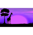 Silhouette giraffe in safari