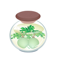 A Jar of Pickled Kohlrabi with Malt Vinegar vector image vector image