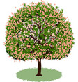 beautiful tree with flowers vector image
