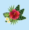 beauty and exotic flowers roses and plants vector image vector image