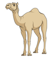 Color image of a camel vector image vector image