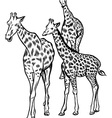 family giraffes vector image vector image
