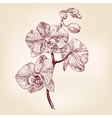 floral orchid hand drawn llustration vector image
