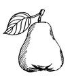 pear sketch vector image vector image