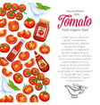 template with red tomato vector image