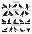birds breeds silhouettes vector image vector image