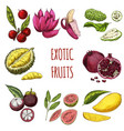 exotic fruits hand drawn collection vector image
