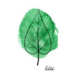 leaf of lilac tree vector image vector image