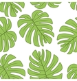 leaf of Monstera plant vector image vector image