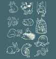pets animals collection set icons symbols sketch vector image