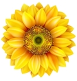 Sunflower realistic EPS 10 vector image vector image