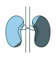 blue color shading hand drawing contour renal vector image vector image