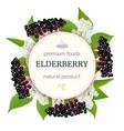 elderberry round circle badge with twig berries vector image vector image