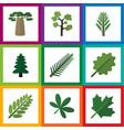 flat icon bio set of leaves spruce leaves alder vector image vector image