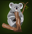 fluffy realistic koala on a branch vector image