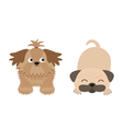 Shih Tzu and pug mops dog set Isolated Flat design vector image