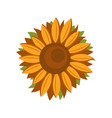 tall sunflower icon flat style vector image vector image