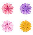 set of dahlia flowers vector image