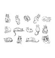 concept of cat hand drown vector image vector image