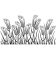 field of wheat vector image