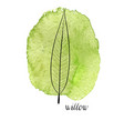 leaf of willow tree vector image
