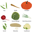 set of different vegetables vector image vector image