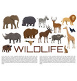 wildlife poster of wild animals vector image vector image