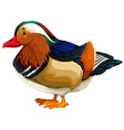 A duck vector image