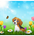 cartoon dog in the grass background vector image