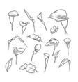 hand drawn elegant callas vector image vector image