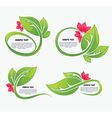 leaves and flower vector image vector image
