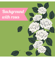 Colorful background with white roses vector image vector image