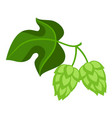 green hops with leaf vector image vector image